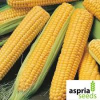 Семена гибрида кукурузы АС 33002-средне-ранний хорошая влагоотдача