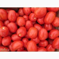 Продажа помидор по оптовым ценам