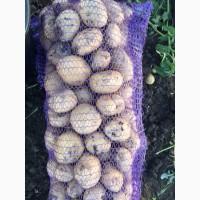 Продам картофель, сорт Аризона