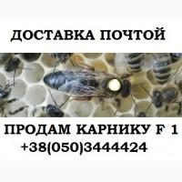 Пчеломатка Карника F-1. Отправка Новой Почтой, Интайм