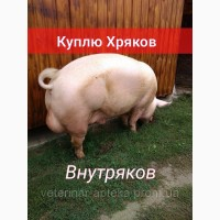 Куплю Свиноматок Хряков Внутряков