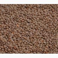 Посев мат. Семена Чечевицы Максим КАНАДА красная устойчива к гербициду