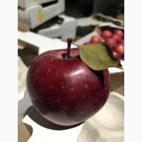Продаємо яблука зі складу.Грені Сміт, Фуджі, Голден, Ред Делішес