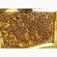 Продам бджолопакети 4рр