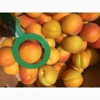 Продаємо абрикос товарний і на переробку.Реєструємо ПДВ