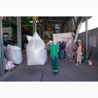 Продам посевную пшеницу - Сотница, Фаворитка, Лира, Гурт, Годувальница. Агротрейд