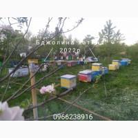 Бджолопакети карпатки з доставкою