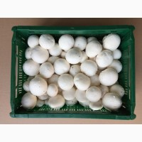Продам грибы шампиньоны OPTOM