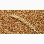 Купим пшеницу с места и в порту