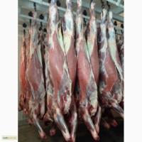 Half beef Young Bull (Halal) - Полутуши говядины молодняк бык (Halal)