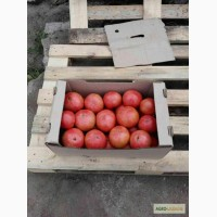 Продам помидор ПИНК ПАРАЙДС(розовый)