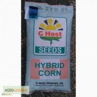 Семена кукурузы G Host