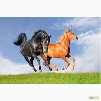 Премикс для Лошадей