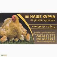 Підрощені курчата, підрощена птиця, бройлер, несучка, мулард