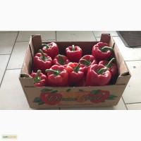 Продам перец болгарский