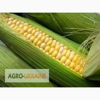 Закупаем кукурузу, пшеницу, овес, ячмень по Луганской обл