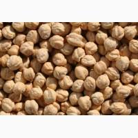 Продам семена нут(100тонн), чечевица(100тонн)