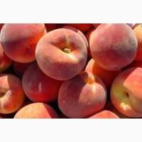 Продам саджанці персика Колінз