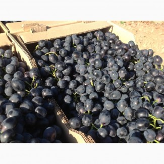 Продам виноград с поля опт