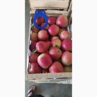 Продам сортове яблуко