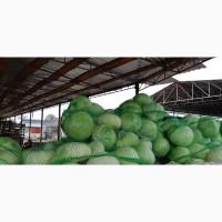 Продаём капусту белокачанную