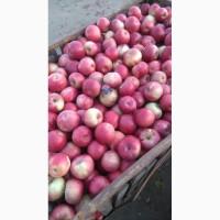 Продам яблоко оптом с сада разных сортов.Урожай 2018 года