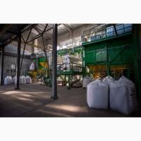 Семена пшеницы - Импорт - Кубус, Колония, Мескаль (высокоурожайные сорта). Агротрейд