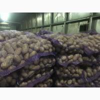 Продам Картофель Гранада цена 6 грн