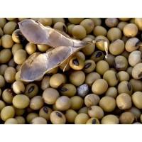 Куплю сою, половинки ГМО и не ГМО влажная битая от 1 тонны самовывоз