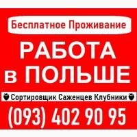 Требуются СОРТИРОВЩИКИ Саженцев Клубники ПОЛЬША