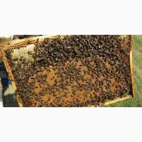 Продам бджолопакети карпатка, 120 пакетів, Закарпатя