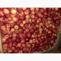 Продам яблка Голден двоїчка велика кількість е щерізні сорта