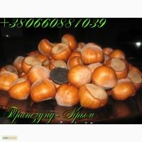 Вегетативные саженцы крупноплодного фундука Трапезунд. (не сеянцы)