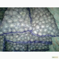 Продам посадочный картофель сорт белароса