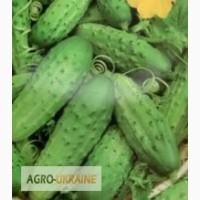 Семена овощей (огурцов, томатов, буряка, моркови, капусты, кабачков и др.)