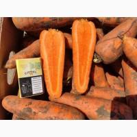 Продаём морковь хорошего качества. Нал. и б/н. рассчёт