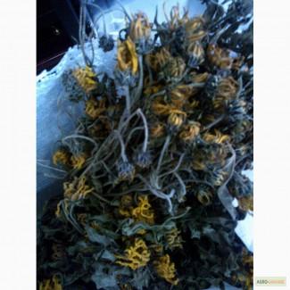 Топінамбур висушений цвіт