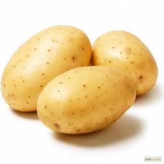 Картофель семенной Гала Элита и 1 РС