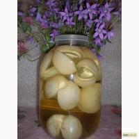 Настойка гриба веселка, гриб веселка, (панна)