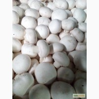 Продам грибы