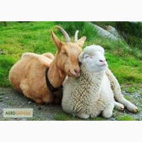 БВМД и Премикс для овец и коз (10%, 2, 5%)