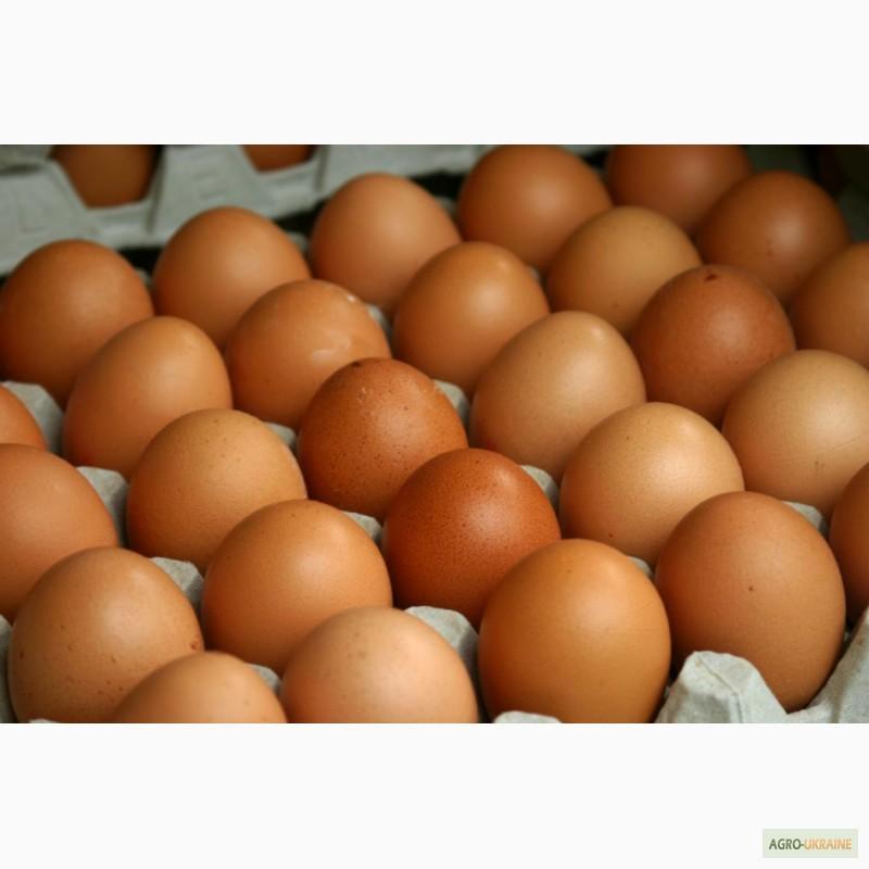 продать куриное яйцо оптом