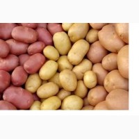 Продам картофель оптом для рынков