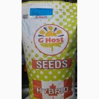 АКЦИЯ Семена Кукурузы G-Host (КАНАДА) урожай 2016 года