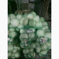 Продам капусту білокачанну