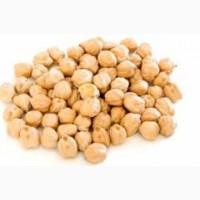 Продаем высококачественные семена нута Иордан