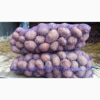 Продам продовольственный картофель. сорт Белла Роза