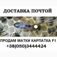 Пчеломатки Карпатка F 1 Доставка с Мукачево Новой Почтой
