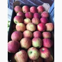 Оптом! От производителя. Лучшие сорта яблок: Голден, Айдаред, Флорина