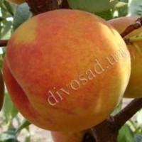 Продам саджанці персика Топ Світ
